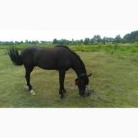 Продам молодого коня. 5 років