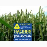 Семена озимой пшеницы Скаген, урожай 2017 года от компании Дер Трей