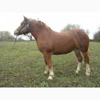 Продам пару коней Новоалександрiiвський ваговоз