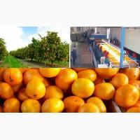 Продам свежие мандарины (Египет)