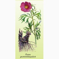 Мар#039;їн корінь продам