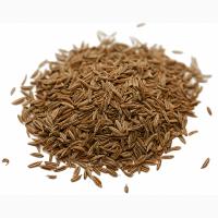 Продам насіння Моркви, сорт Шантане , Королева осені