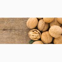 Закупаем грецкий орех кругляк бойный дорого урожая 2018