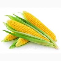 Куплю кукурудзу ВОЛОГУ