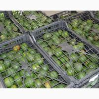 Продам авокадо разных сортов оптом