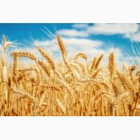 Купим пшеницу 2-6 класс