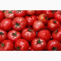 Купим томаты, от 20 тонн