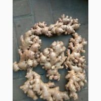 Fresh Ginger / Cheap quality Fresh ginger suppliers