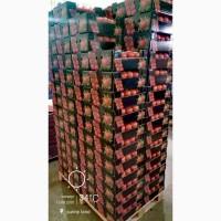 Продам помидоры из Египта