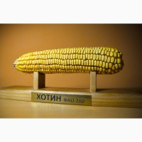 Семена гибрида кукурузы Хотин ФАО - 280