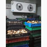 Продам гриб білий морожений 2020. 1, 2, 3 сорти без радіації