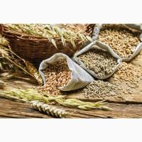Закупаем пшеницу 4, 3, 2-й класс