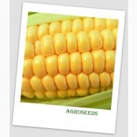 Продам Насіння надцукрової кукурудзи Ларус, 50 шт