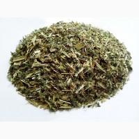 Яснотка белая (трава) 1 кг