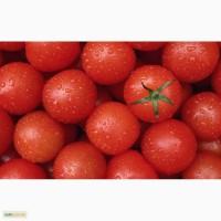 Торговій компанії потрібні оптові постачальники помідорів