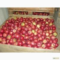 Яблука з РГС