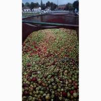 Куплю яблоки Полтавская, Сумская обл и другие регионы, цена дог