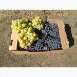 Продам виноград свежий столовых сортов