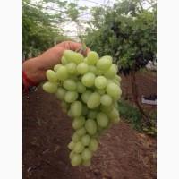 Продам виноград оптом