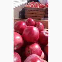 Продам яблука сорту флоріна