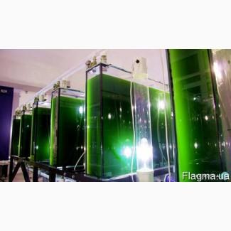 Байкальская хлорелла от производителя. Живой планктонный штамм
