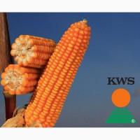 Посевной материал кукурузы от лидеров агро бизнеса