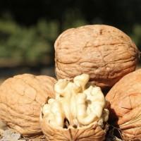 Куплю грецкий орех урожая 2018 года по Сумам и Сумской области
