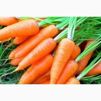 Продам моркву з Білорусії