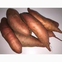 Батат (Sweet potato)