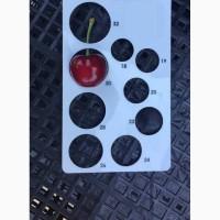 Черешня крупноплодная, черешня валерий чкалова, черешня с сада оптом