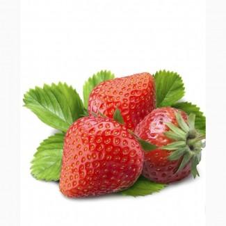 Закуповуємо полуницю без плодоніжки під заморозку. ВОЛИНЬ