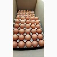 Реализуем яйцо куриное оптовый продажа доставка