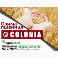 Озимая пшеница Colonia (Limagrain), Сумская обл