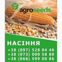 Семена. Гибриды кукурузы. Агротрейд / Agroseeds - Харьковская область