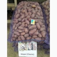 Продам картоплю посадкову ранніх сортів