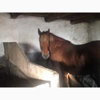 Продається кобила