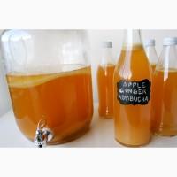 Продаю органическую комбучу, чайный гриб, комбуча, kombucha Scoby, напиток, квас. гриб