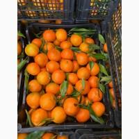 Мандарин Клементин Греция оптом, мандарин прямые поставки