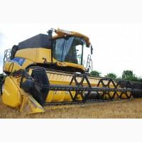 Пшеница нового урожая. Купим оптом
