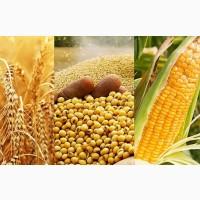 Закуповуємо відходи кукурудзи, пшениці, сої, соняшнику