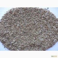 Грястыця (Ежи) семена