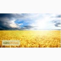 Закупаем пшеницу по всей Украине