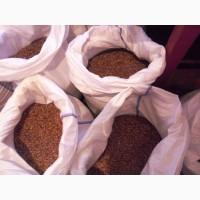 Посадочный материал озимого сортового чеснока СОФИЕВСКИЙ сорт