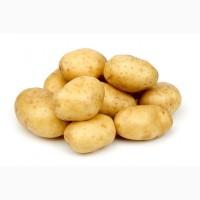 Продам Картофель оптом и в розницу