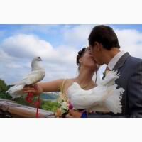 Продажа почтовых голубей на свадьбу