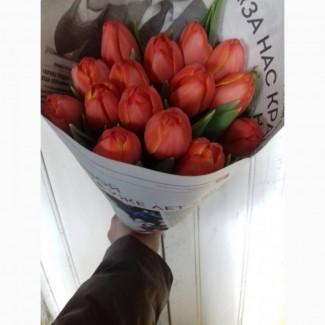 Продам выгонку тюльпан крокус геоцинт