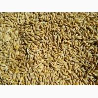 Компанія закупляє Кукурудзу відходи кукурудзи Пшеницю(Фураж)ячмінь сою