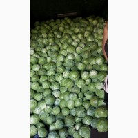Продаж ранньої білоголової капусти гібрид MIRROR F1, об#039;єм 100т