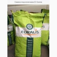 Семена подсолнечника Евралис Белла купить. Семена подсолнечника и кукурузы