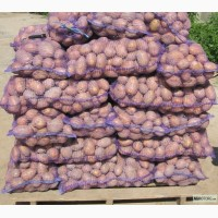 Продам товарный картофель, сорт Славянка